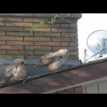 If You Every Wondered If Birds Poop On Other Birds Like They Do To People, Watch This