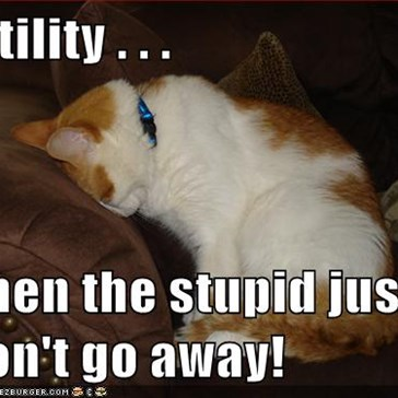 Futility . . .   when the stupid just won't go away!