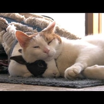 Here's a Video of Bunnies and Cats Being Best Friends to Start Sunday Off Right