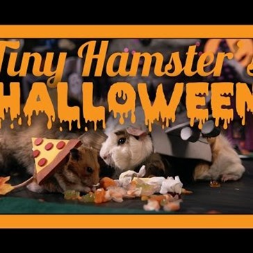 This Tiny Hamster Threw the Most Adorable Halloween Party You'll Ever See