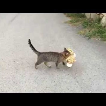 Clever Cat Tries to Steal a New Best Friend From the Neighbors