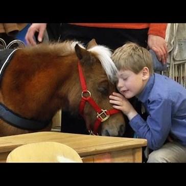 A Boy's Miniature Service Horse Finally Meets His Class
