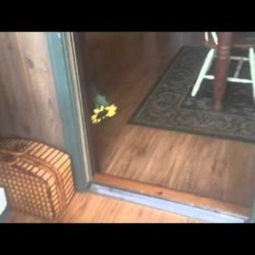 Cute Kitten Plays Fetch