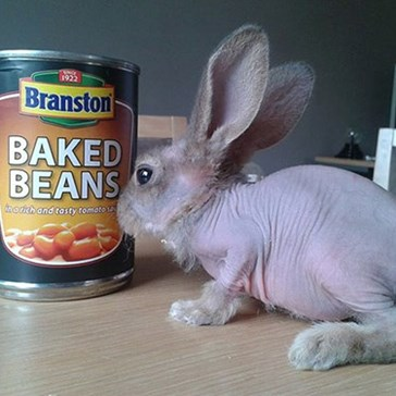 his Hairless, Dwarf Rabbit Needs More Sunscreen Than You