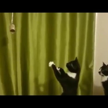 This Cat's Perception Troubles Are How All Of Us That Made New Year's Resolutions Feel