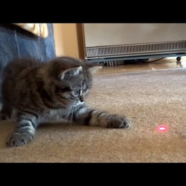 Kitties First Laser