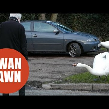 Elderly Residents Protect Themselves From Aggressive Swans With Water Pistols