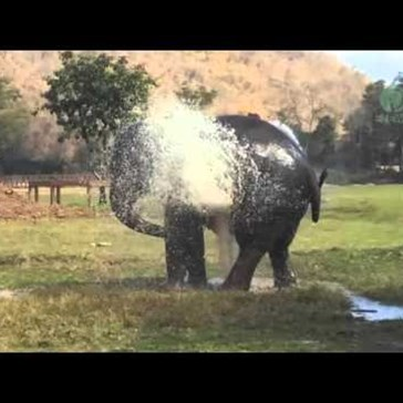 Elephant Breaks Sprinkler Again To Frolic In The Water