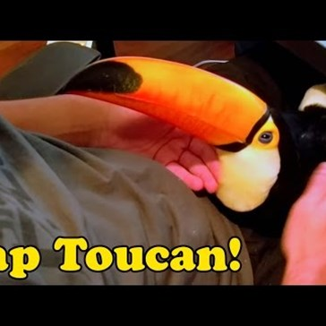 Toucan Cuddles Are Perfect For Your Lap