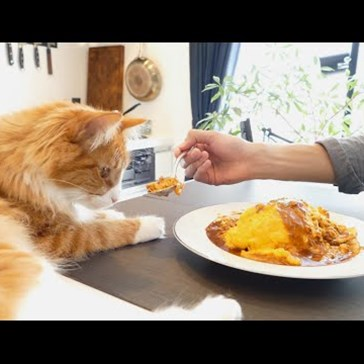 The Best Way to Make Fluffy Japanese Omelette Rice is to Have a Purrfect Sous Chef