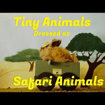 These Tiny Animals Dressed as Safari Animals are Adorable