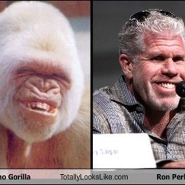 Clay Morrow from Sons of Anarchy Totally looks like an Albino Gorilla