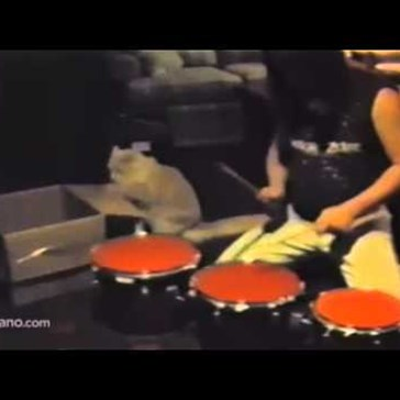 Cat and Human Team up for an Epic Drum Solo