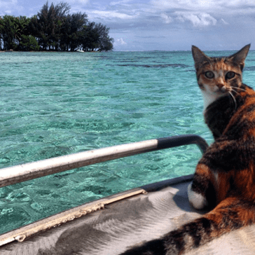 "Fearless ""Tropicat"" Sails Around the World on a Boat With Her Human"