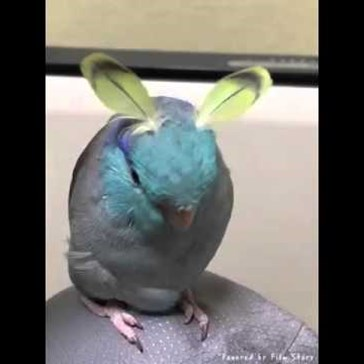 Check Out This Rare Video of the Elusive Bunny Bird