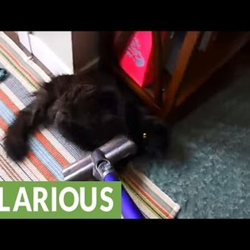 Most Kitties Hate the Vacuum, but Not This One