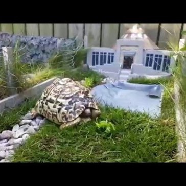 Guy Builds Mini Jurassic Park for His Tortoise, and the Final Product Is Wonderful
