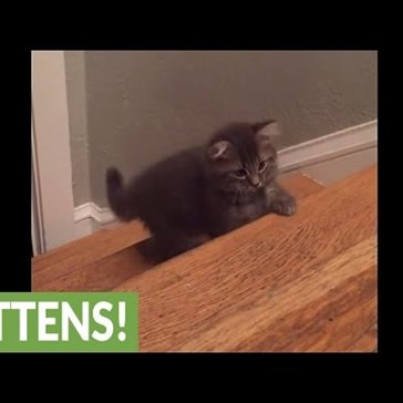 Three Tiny Kittens Learn How to Play on the Stairs