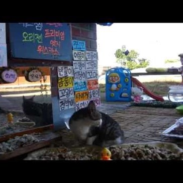 This Live Stream of Stray Cats in South Korea is Like Neko Atsume IRL