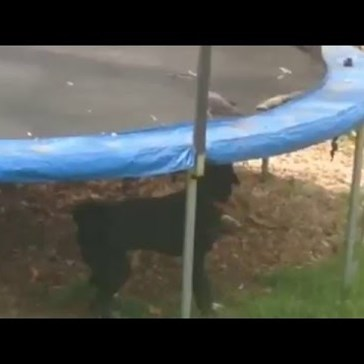 Friendly Dog Tries to Help a Bird Enjoy His Trampoline