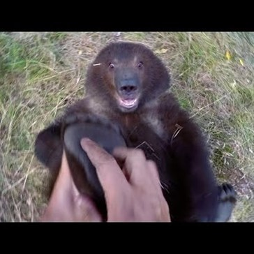 Watch a Grizzly Bear Cub Get Her Feet Tickled