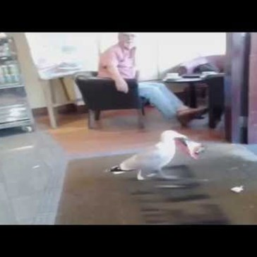 Not a Lot of Shoplifters Have the Confidence of This Seagull