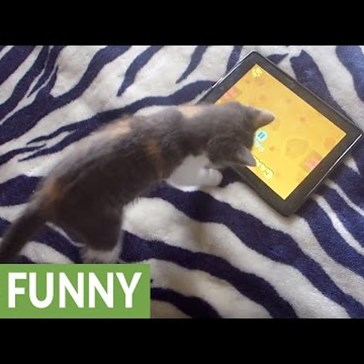 This Silly Kitten is Obsessed With iPad Games Just Like a Real Kid