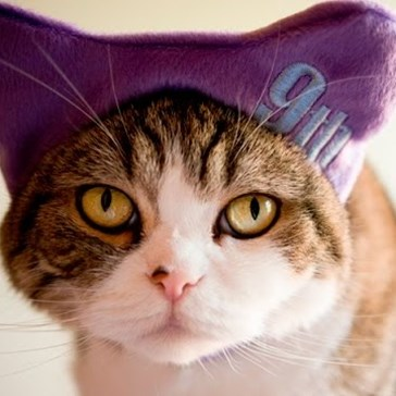 Here's Some of Maru's Best Kitty Moments to Celebrate His 9th Birthday