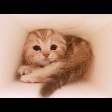 Go Where No Human Has Gone Before: Inside a Box With an Adorable Kitten