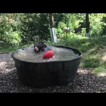 Black Bear Enjoys a Refreshing Soak on a Hot Day in Oregon