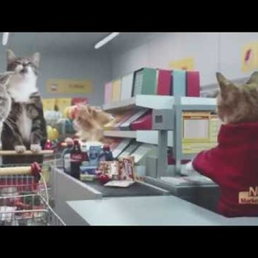 A Grocery Store Used the Internet's Favorite Cat Videos as Inspiration for Their New Commercial