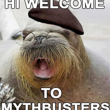 Today's Myth: Jamie Hyneman is Actually a Walrus