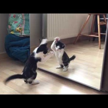 Kitten Discovers and Battles a Mirror for the First Time