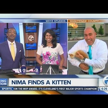 Stray Kitten Interrupts a News Broadcast and Immediately Gets Put on TV