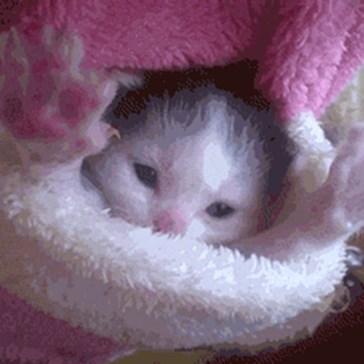 Good Morning, Little One!