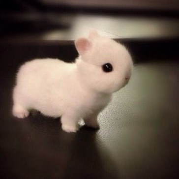 Wanna See Me Hop?