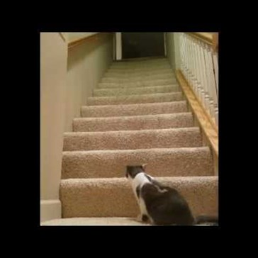 This Cat's Impressive Journey up the Stairs Is Worth Watching