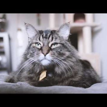 "Felines of New York Just Debuted Their New ""Interview"" Series: Cat Talk"