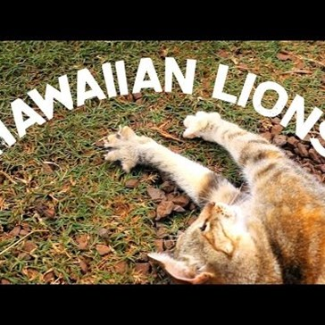 The Lanai Cat Sanctuary in Hawaii Is Every Cat Lovers Dream Come True