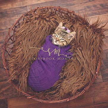 First Babies, Then Puppies, and Now Kittens Get Their Own Newborn Photoshoots!