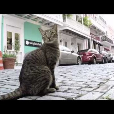 Get to Know the Feral Cats of San Juan, Puerto Rico