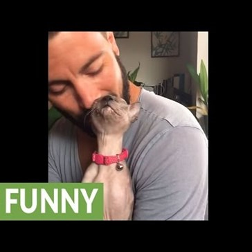 Sphynx Cat Uses Her Human's Beard as a Scratch Post