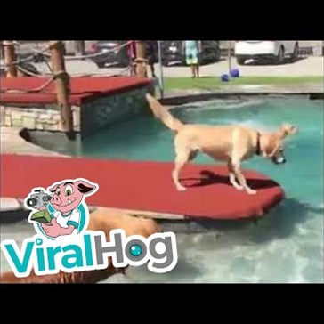 Golden Retrievers Enjoy a Very Exclusive Pool Party