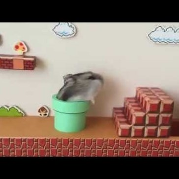 Curious Hamster Explores a Level of Super Mario Bros