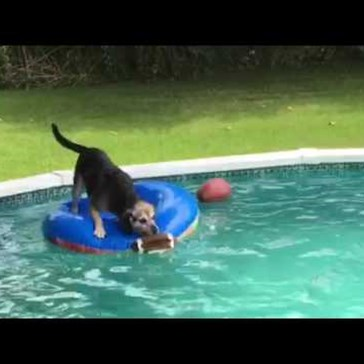 Dog Finds a Way to Get His Football out of the Pool Without Getting Wet