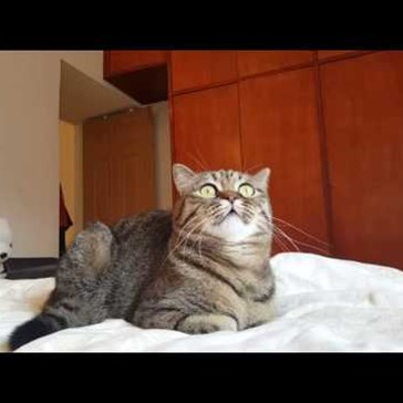 There's Something Really Epic About Watching a Cat Listen to Classical Music