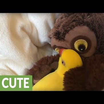 Parrot Snuggles and Cuddles With an Owl Puppet
