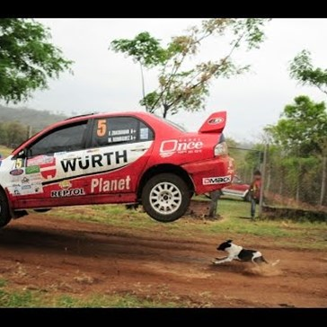 This Dog Avoiding a Rally Car Might Actually Be a Miracle