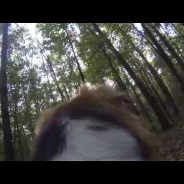 Dog With a GoPro Finds a Random Stranger in the Woods