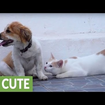 Puppy and Cat Meet for the First Time; Definitely Become Friends
